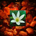 Dark Amber & Ginger Lily Fragrance Oil