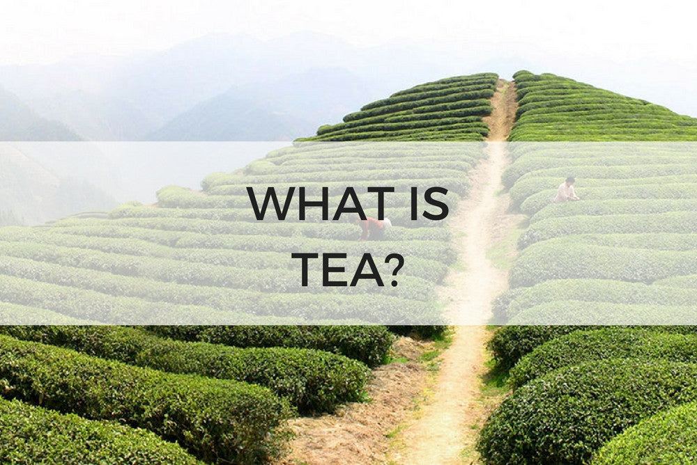 what is tea - lesson 102