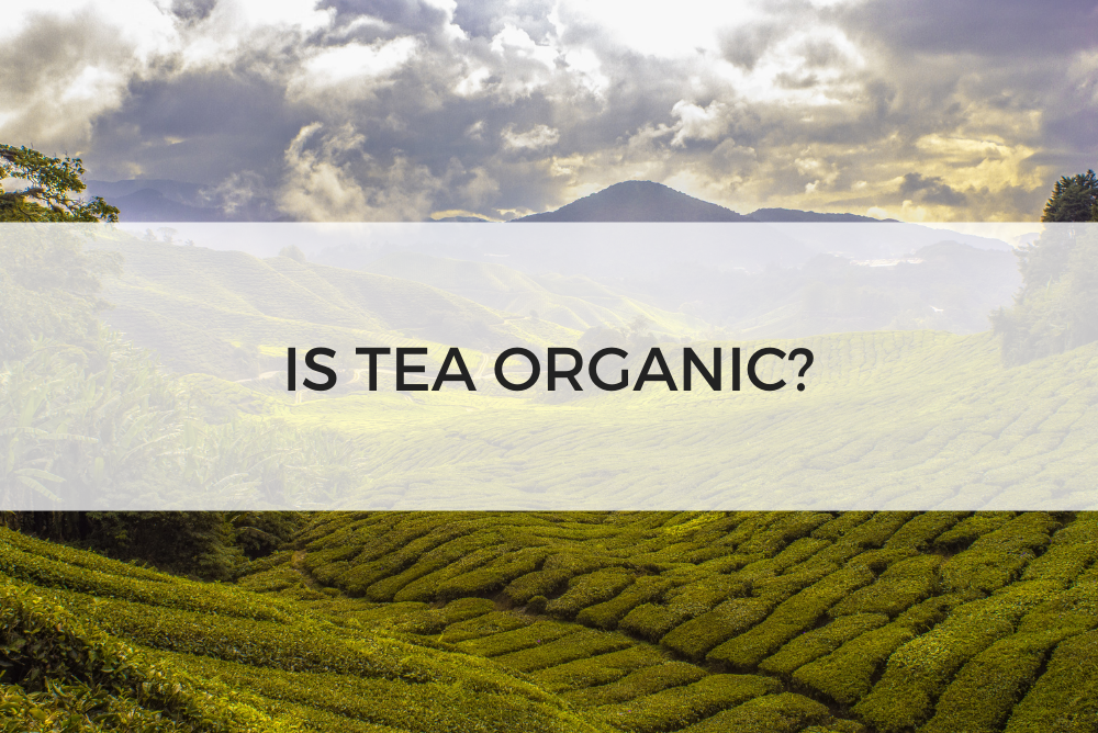 IS TEA ORGANIC? SIPS BY BLOG POST ARTICLE