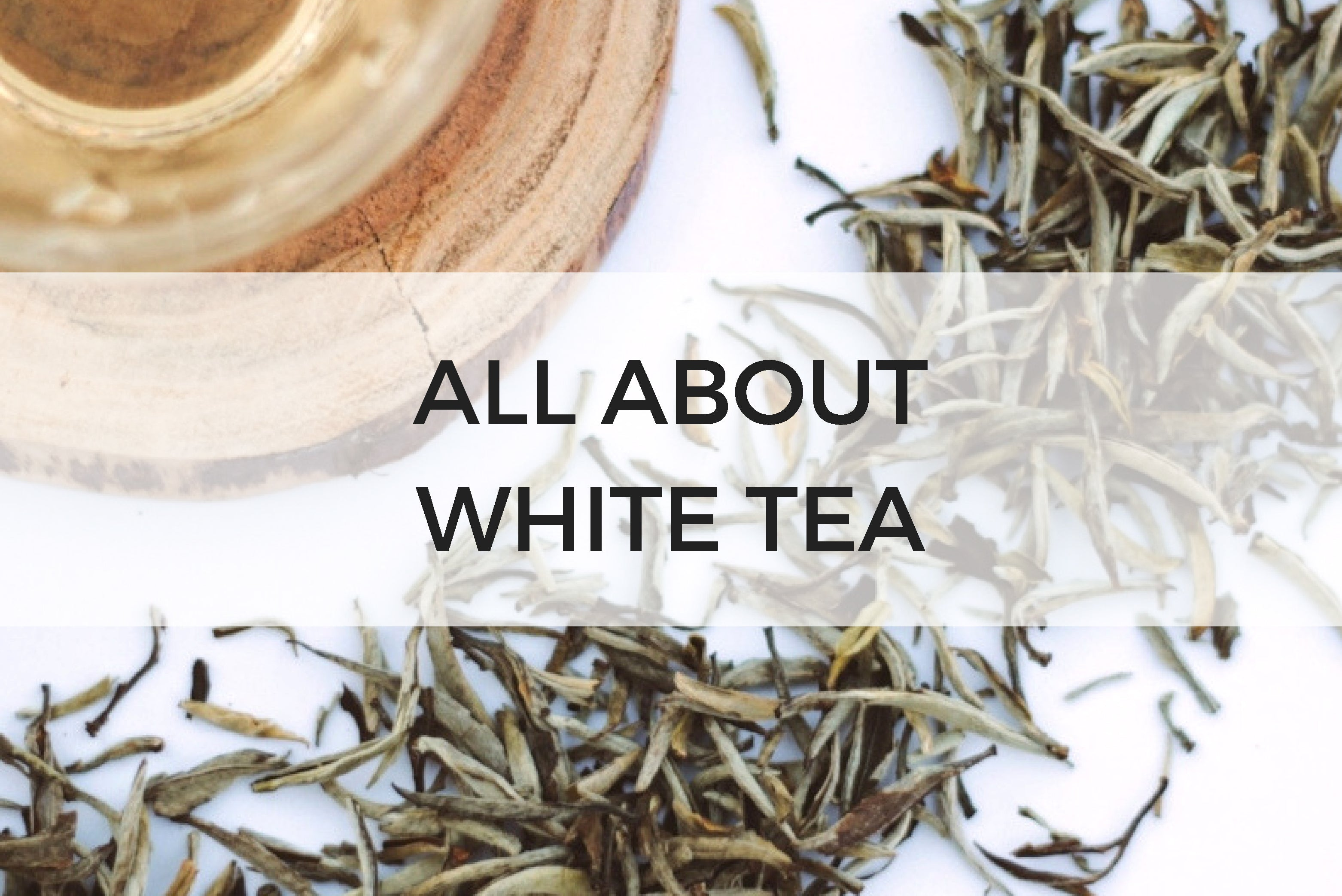 All About White Tea Sips By
