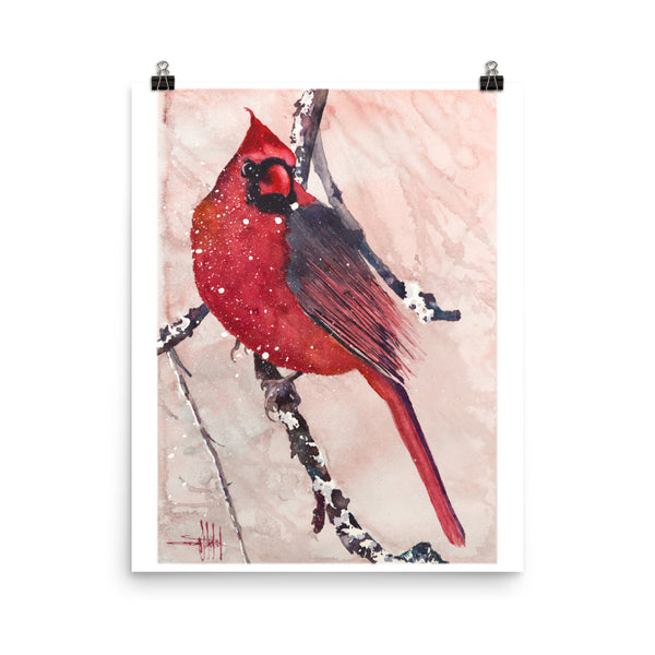 Cardinal of Maine *Fine Art Prints