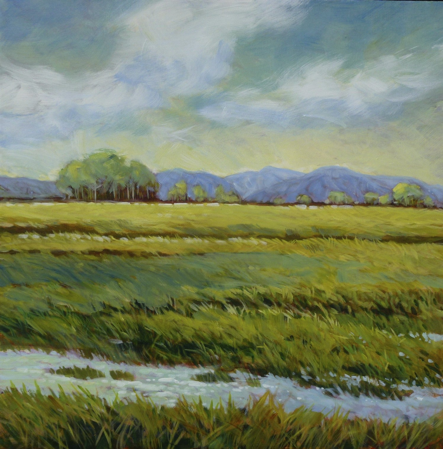 Spring Field by Janice Robertson