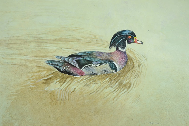 Wood Duck by Mong Yen
