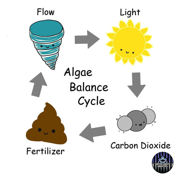 The algae cycle by Arctic Lights Aquatics