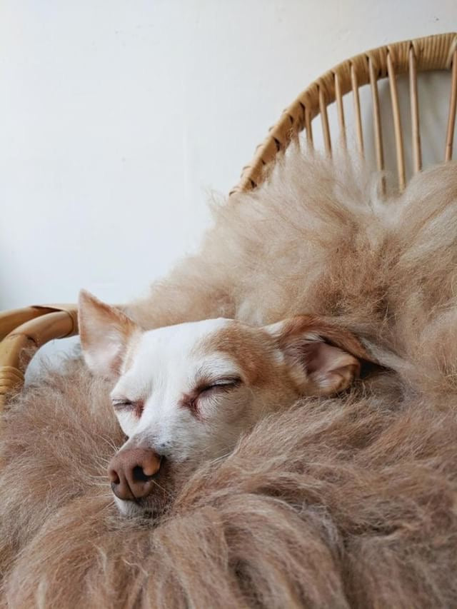 Animals love natural sheepskin too! Find out why..