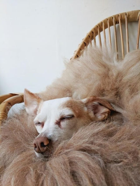 Dogs and cats love natural sheepskin too! Find out why..