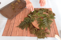 cut wood with moss and how to transfer