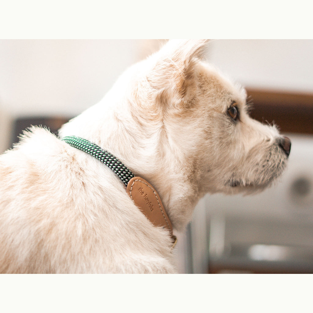 the furryfolks, Rope Collar, Green