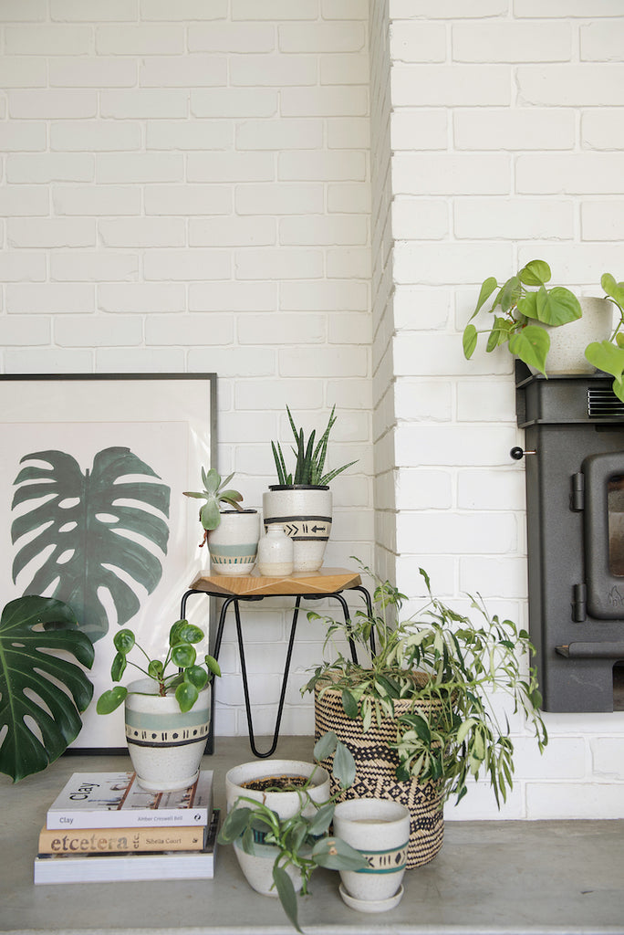 The ultimate Spring to-do list for your indoor plants