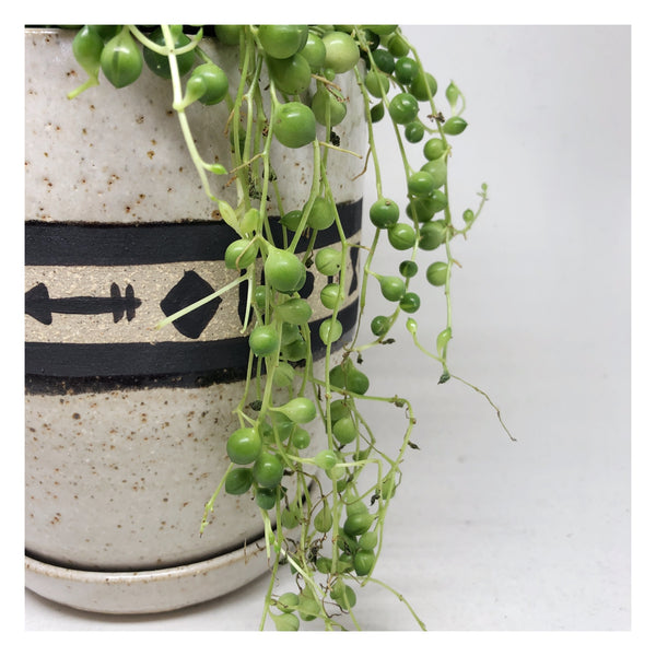 handmade planter string of pearls perth