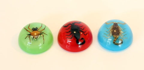 3PC Scorpion And Spider Magnet Box Set