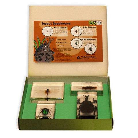 4PC Insect Specimen Biology For Kids