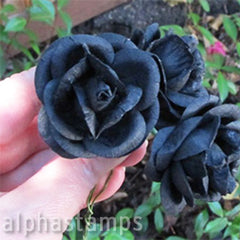 2 Inch Black Paper Roses*