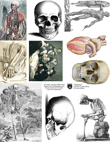 Anatomy Collage Sheet