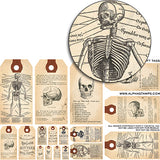 Anatomy Gift Tags Half Sheet