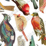 Birds Collage Sheet