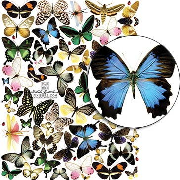 Montreal Butterfly Collage Sheet