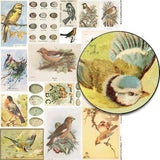 Ornithology Collage Sheet