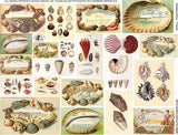 Shell Postcards Collage Sheet
