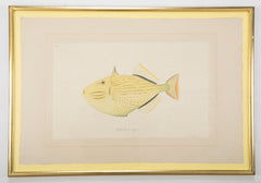 La Roche Laffitte Handpainted Fish on Silk