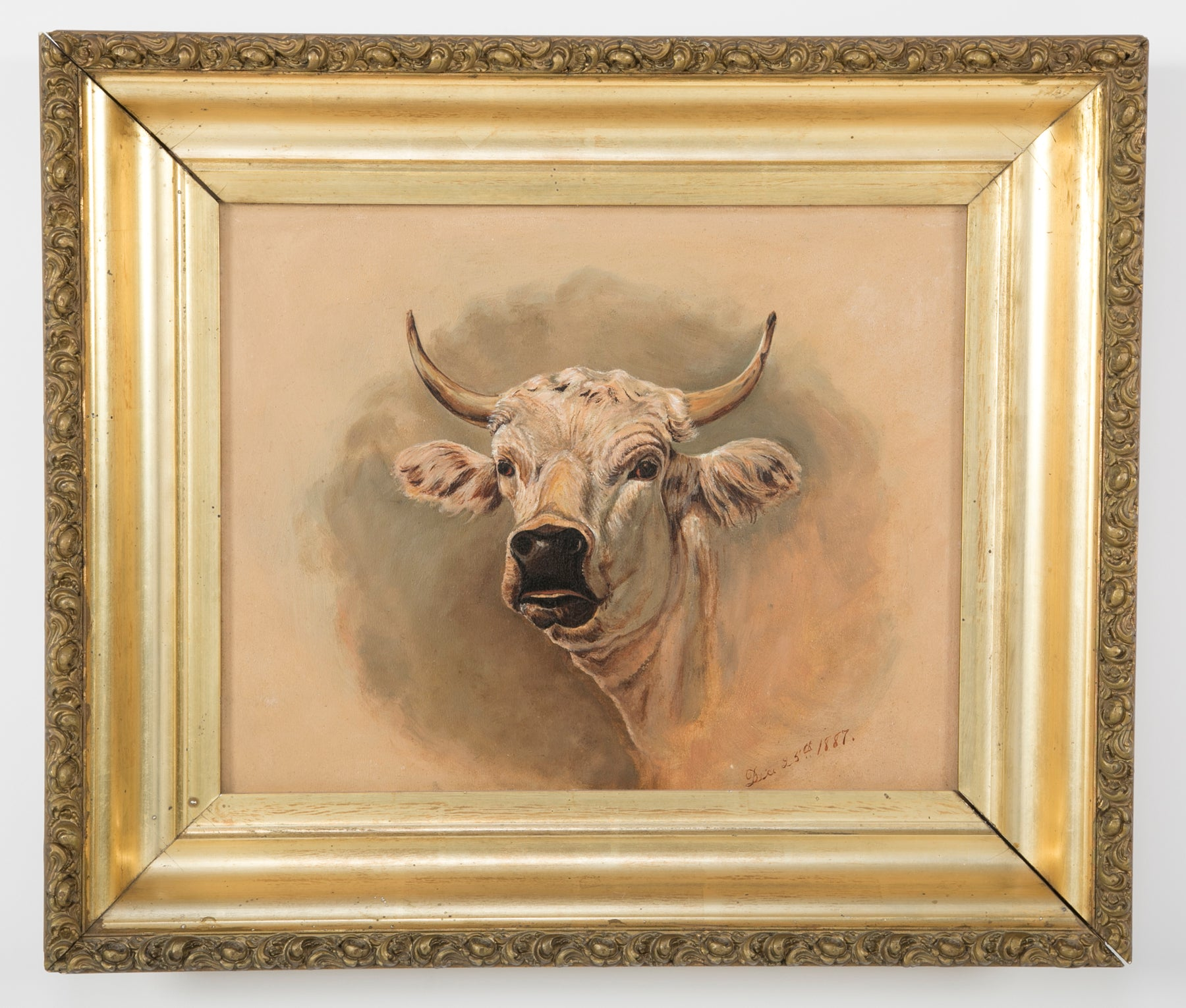 Oil on Board of a Prize Bull
