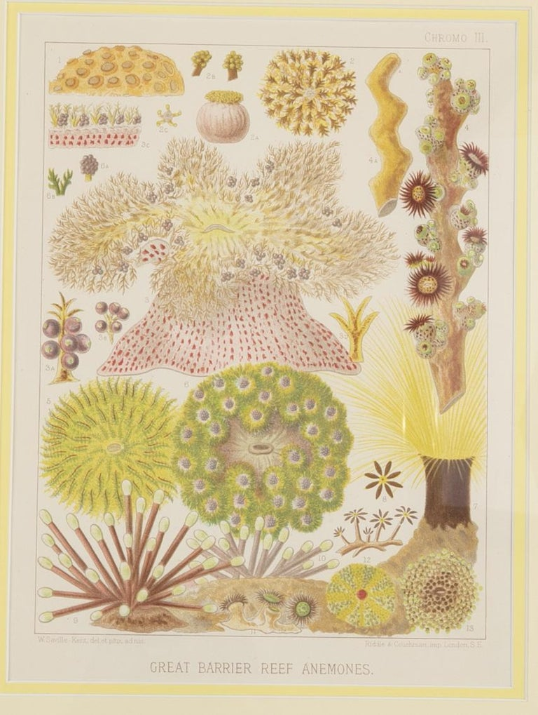 Set of Six Chromo-Lithographs of Australia's Great Barrier Reef