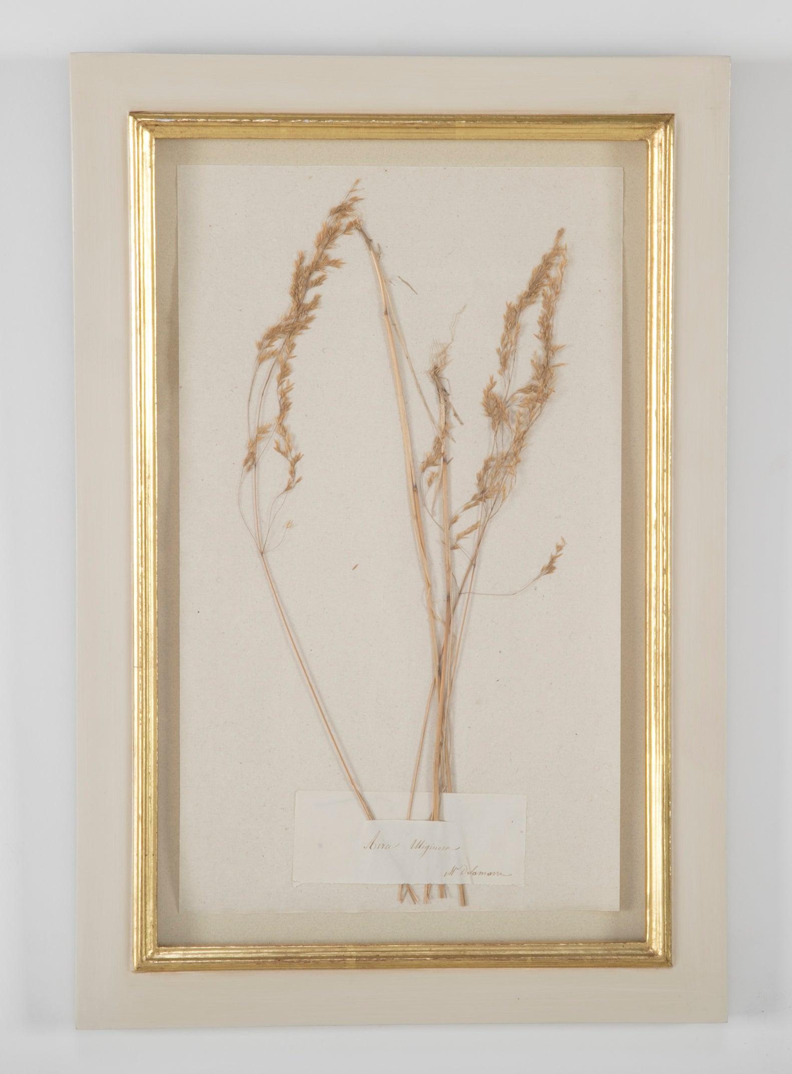 Early 20th Century French Herbiers in White Glazed Frames