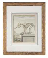 18th Century French Hand Colored Etching by Comte de Buffon