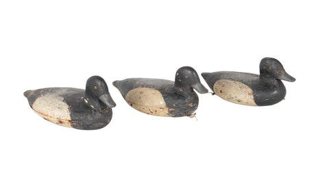 Set of 3 Bluebill Drake Decoy Rig Mates Attributed to Cassius Smith of Connecticut
