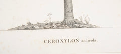 Ceroxylon Andicola Palm Print by Sellier