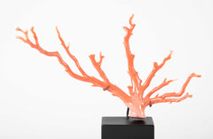 A Polished Specimen Piece of Branch Coral on Stand