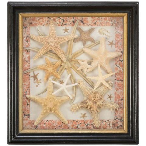 Vintage Starfish Collection in Mahogany & Gilt Wood Frame