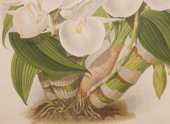 Pair of Orchid Prints by J.N. Fitch