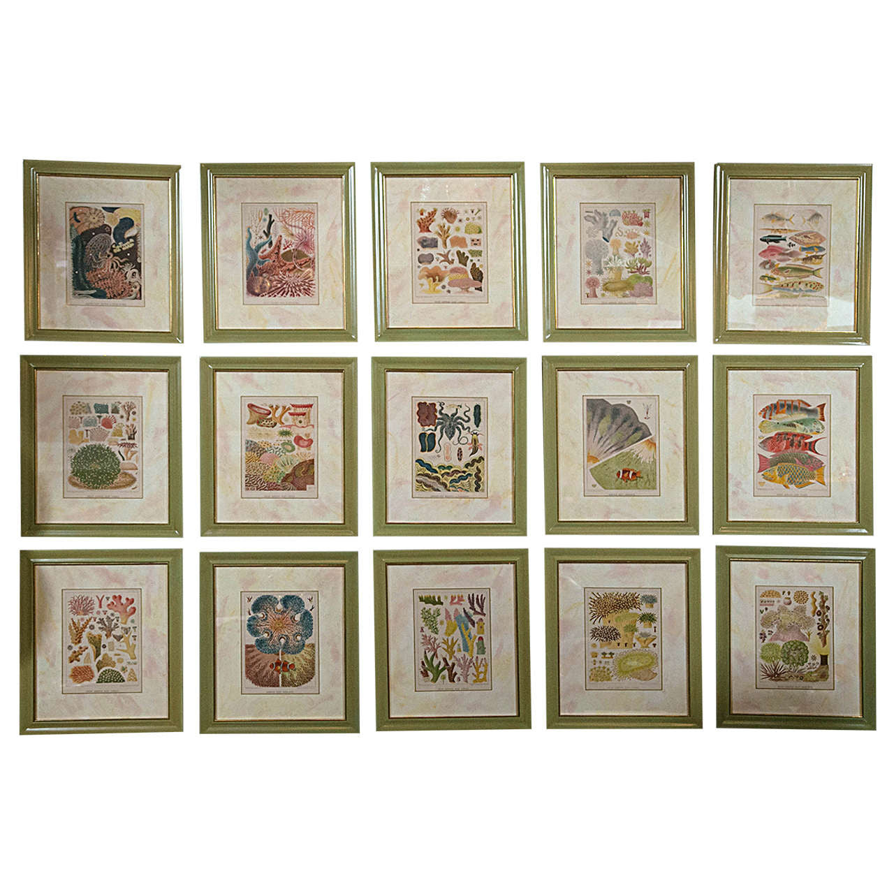 Set of 15 Chromolithographs by W. Saville-Kent