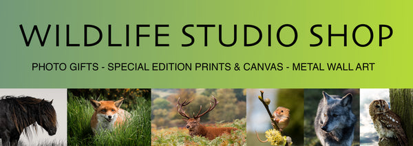 Wildlife Studio
