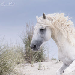 Beach hair - Luan Kay Photography Shop, horse photography, wildlife photography