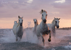 Camargue sea horses - Luan Kay Photography Shop, horse photography, wildlife photography
