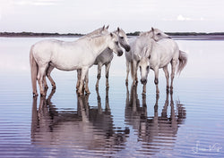 Ripples from the Camargue - Luan Kay Photography Shop, horse photography, wildlife photography