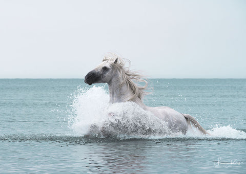 Sea Horse - Luan Kay Photography Shop, horse photography, wildlife photography