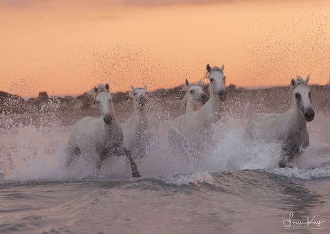 Sea Spray Horses - Luan Kay Photography Shop, horse photography, wildlife photography