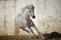 Spots on the move - Luan Kay Photography Shop, horse photography, wildlife photography