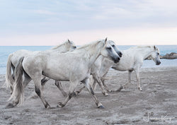 Tails from the beach - Luan Kay Photography Shop, horse photography, wildlife photography