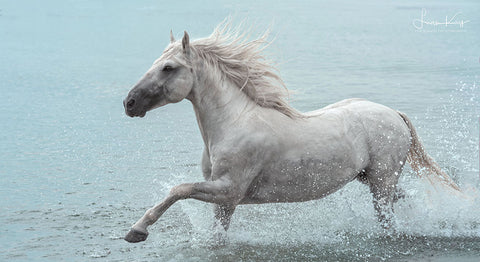 White Sea Stallion - Luan Kay Photography Shop, horse photography, wildlife photography