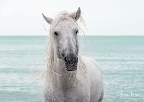White Stallion of the Camargue - Luan Kay Photography Shop, horse photography, wildlife photography