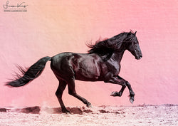 Black Stallion on pink