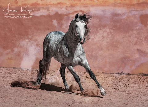 Pretty in Pink - Luan Kay Photography Shop, horse photography, wildlife photography