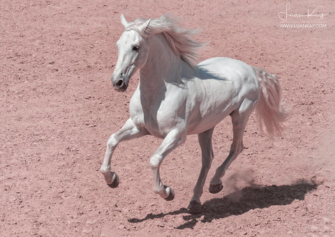 White Stallion on pink