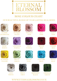 6 Piece Blossom Box -  Ivory Box - 20 Different Rose Colours!
