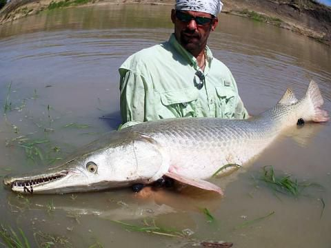 Monster Gar Was Caught in the Murky Texas Waters