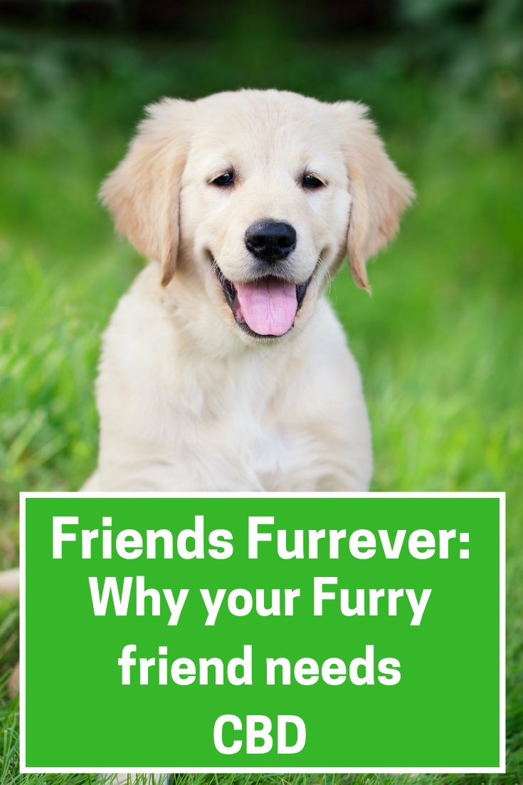 Friends Furrever: Why Your Furry Friend Needs CBD Treats